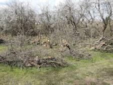 ASVZ gaat verwaarloosde boomgaard van Dudok onderhouden