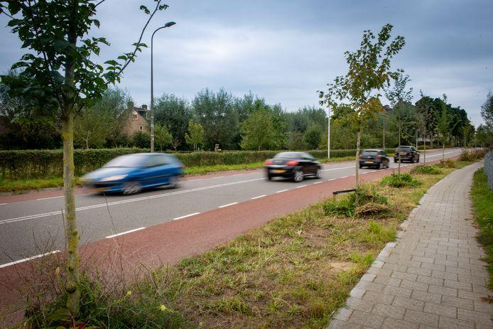 Een lint nieuw geplante bomen langs de Harenbergweg. De gemeente Zutphen liet er in januari dit jaar wegens ziekte zo'n zestig bomen kappen. In maart kwamen er daar 138 voor terug. Een voorbeeld hoe wethouder Annelies de Jonge het nieuwe bomenbeleid in Zutphen wil vormgeven. Er moeten duizenden bomen bijkomen.