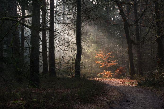Zonneharpen in het Oisterwijkse bos. Foto Gijs de Reijke