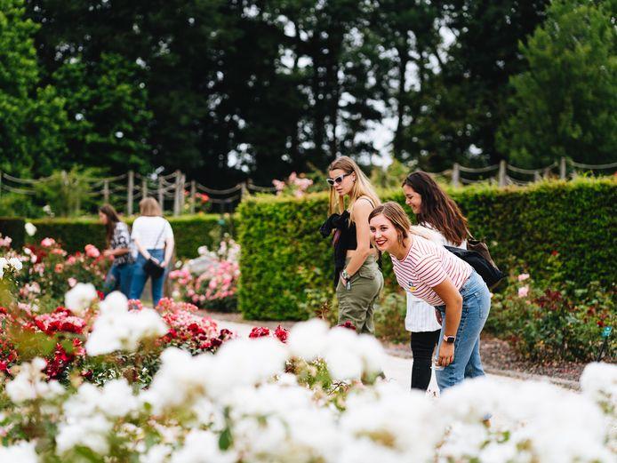 200.000 rozen bloeien deze maand in de bekende Rozentuin op het Colomadomein.