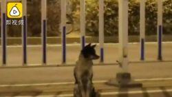 Rouwend hondje houdt al 80 dagen de wacht aan drukke weg waar baasje omkwam