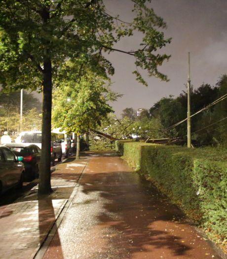 Het waait aardig: schade aan bus en bovenleiding tram door omgevallen boom en weg afgesloten