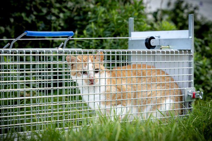 Medewerkers van Stichting Zwerfkatten Nederland vingen eerder dit jaar verwilderde katten op Texel.