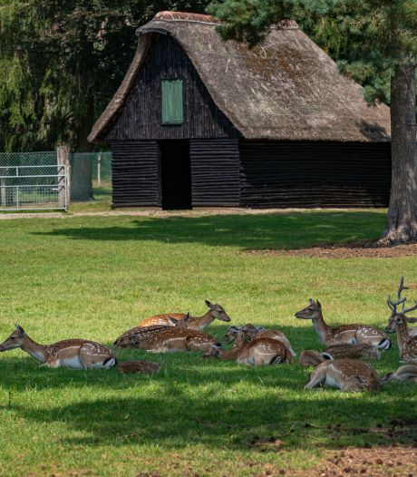 Het vernieuwde hertenkamp bij Epe? Dat moet een plek voor rust worden