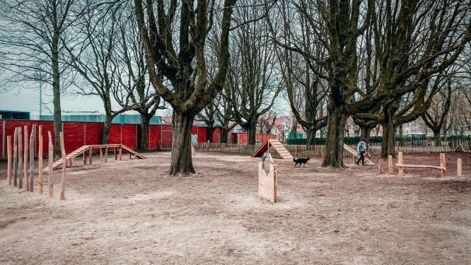 Nieuw behendingheidsparcours voor honden in Schaarbeek