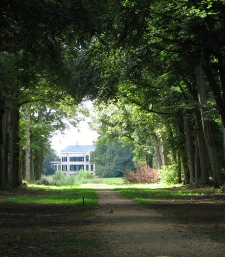 Opinie: 'Koester die eeuwenoude beuken aan de Broekhuizerlaan in Leersum'
