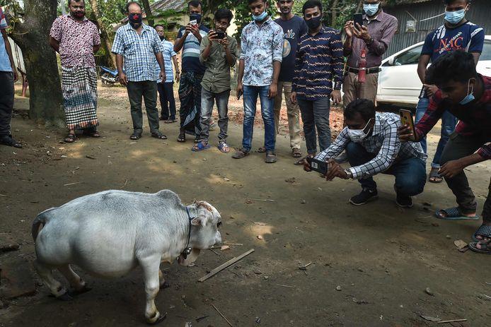 In Bangladesh zakken duizenden mensen dagelijks af naar een boerderij in Charigram om een bezoekje aan de dwergkoe Rani te brengen.