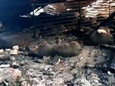 Tientallen houden wake om 4600 dode varkens door stalbrand
