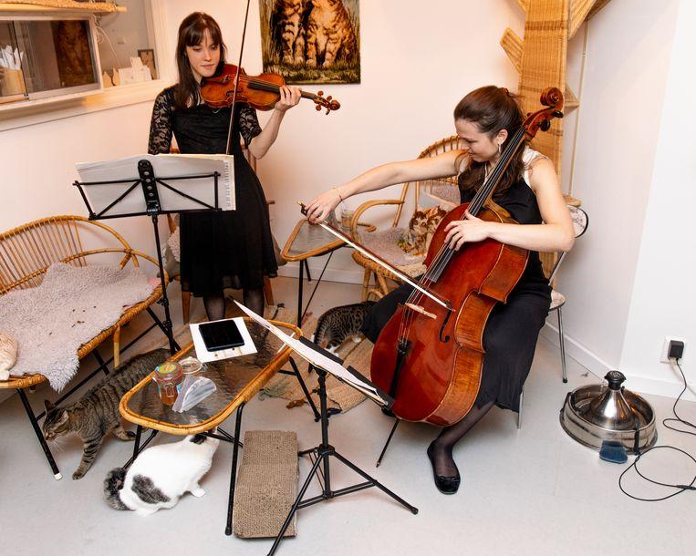 Klassieke muziek voor de katten in kattencafé Kopjes. Beeld Lin Woldendorp