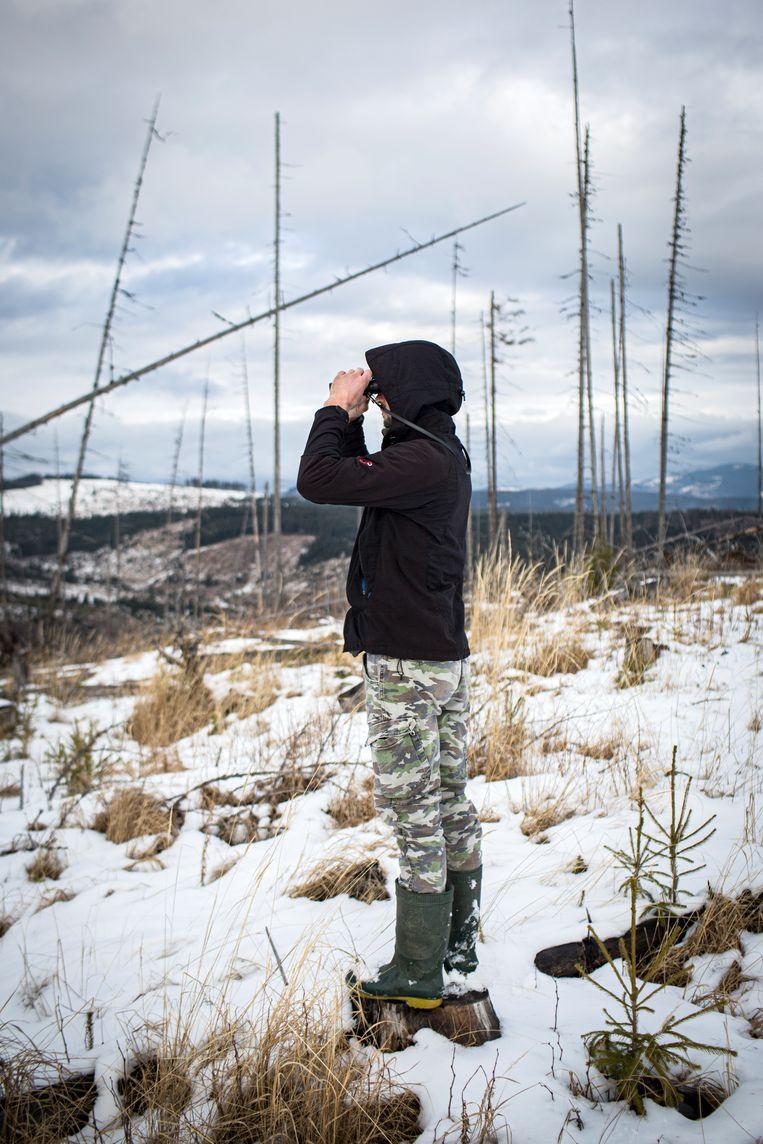 Vlad ziet steeds vaker hoe dieven het op zijn bos hebben gemunt. Beeld Julius Schrank
