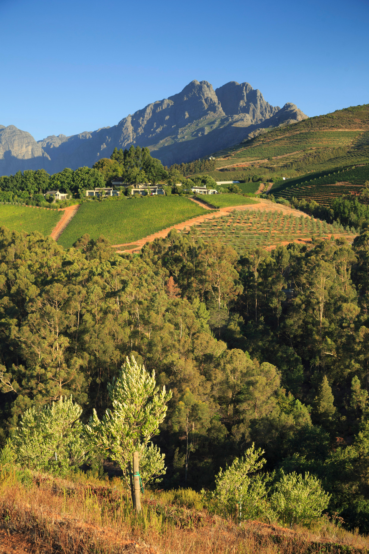 Het Tokara Wine Estate in Stellenbosch.