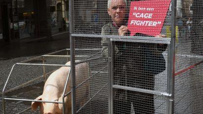 GAIA sluit tientallen 'kooivechters' op in Leuven