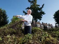 Metershoge distels zorgen voor irritatie: 'Biodiversiteit oké, maar dit is een stad'