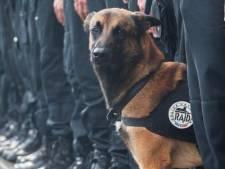 #JeSuisChien eerbetoon voor gesneuvelde diensthond