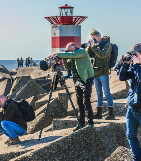 Vogelspotters rukken massaal uit: Bijzondere meeuw opgedoken in Scheveningen