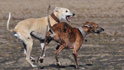Vier nieuwe losloopzones voor honden