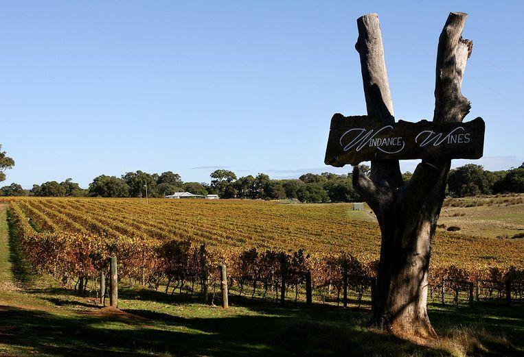 Een wijngaard  in het zuidwestelijke wijnbouwgebied van West-Australië Beeld AFP PHOTO/Greg WOOD