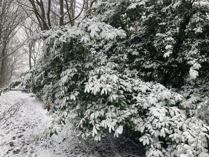 De sneeuw zorgde voor prachtige taferelen in het bos op de grens met Nederland.