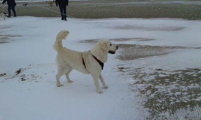 Polar uit Neede enthousiast over de sneeuw op het strand van Texel.
