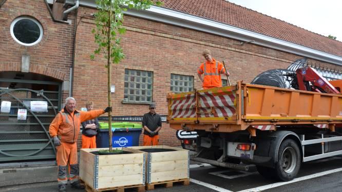 """Gemeente plant vergroening Crevestraat: """"Voeren ook schoolstraat in"""""""