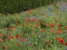 Boxtel en Gestel zaaien 14.000 vierkante meter wilde bloemen in