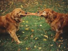 Wijkvereniging Goes-Zuid dubt over hondenspeelplaats