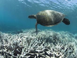 Koraalriffen kunnen tegen 2100 volledig verdwijnen door klimaatverandering