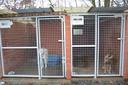 Vooral grote honden belanden het vaakst in het asiel.