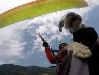 Viervoeter Kyra doet niets liever dan paragliden met haar baasje