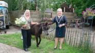 """Ezelshoeve viert 15de verjaardag: """"Met negen ezels begonnen en nu zijn er dat dagelijks 35"""""""