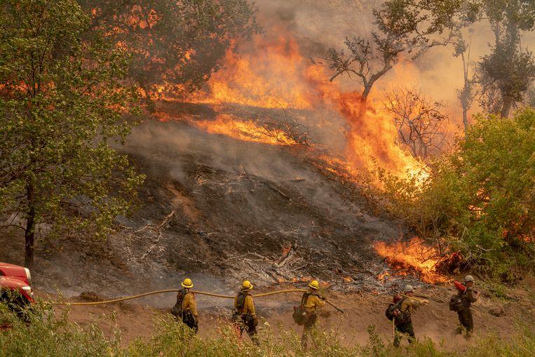 Brandweerlieden bestrijden het vuur in San Bernardino National Forest, Californië. Beeld EPA