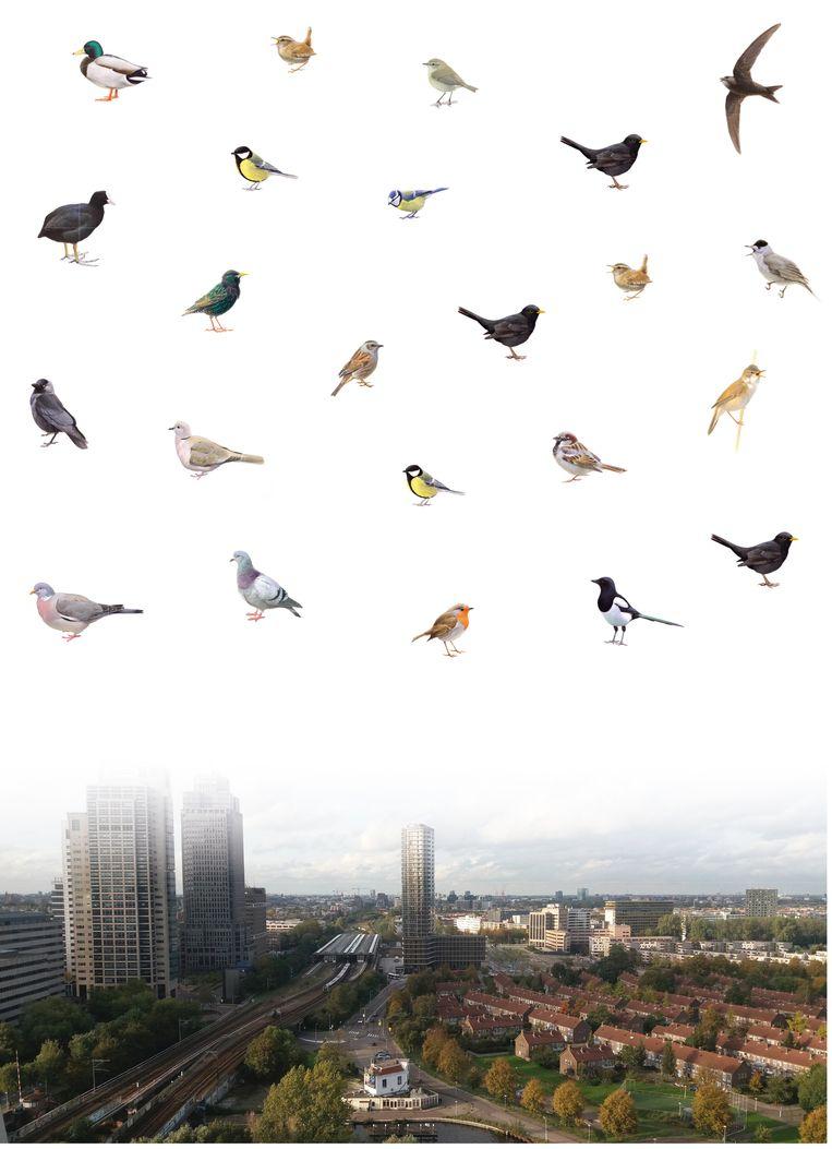 De vogels van het stedelijke gebied. Beeld Illustratie: Elwin van der Kolk, foto: Wim van der Ende, infographic: Sam Gobin