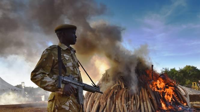 """""""Handel in ivoor woekert als nooit tevoren in Centraal Afrika"""""""