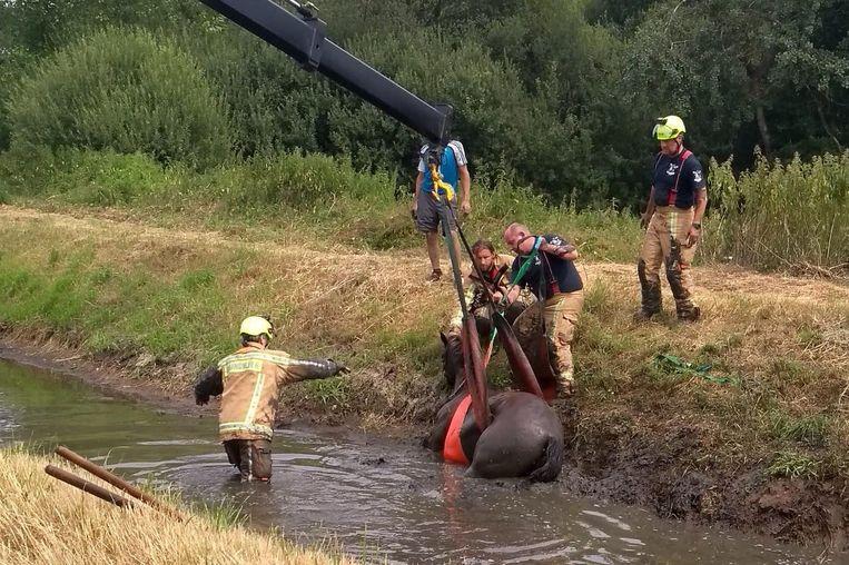 De brandweer hijst het paard met behulp van een kraan uit de beek.
