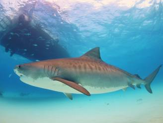 Talloze zeedieren zwemmen in cirkels, niemand weet waarom