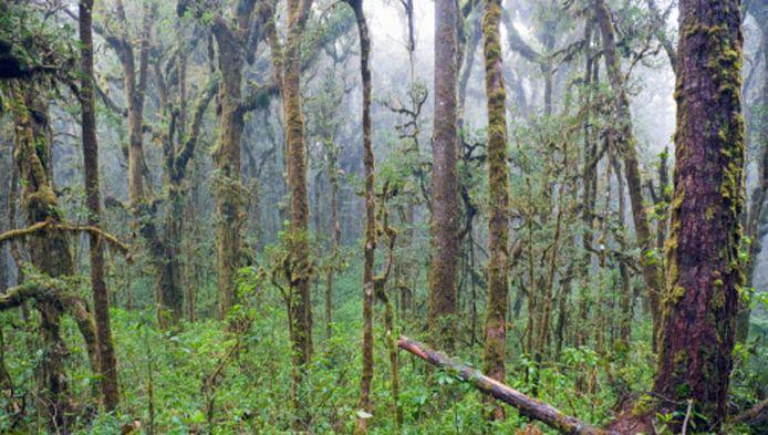 De stad ligt diep verborgen in het regenwoud van Honduras.