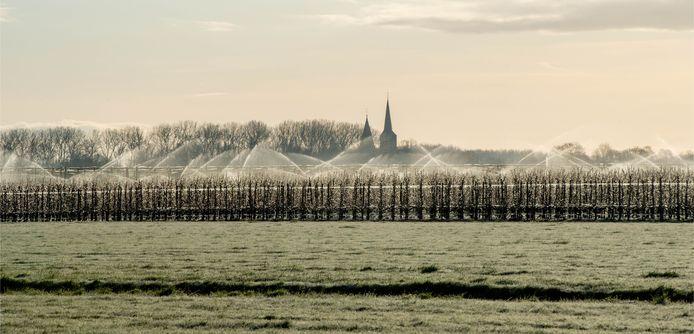 De fruitbomen van Brokken in Horssen worden beregend om de bloesem te beschermen tegen de vorst.