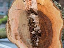 Deel van gekapt hout Varsseveld blijft als herinnering