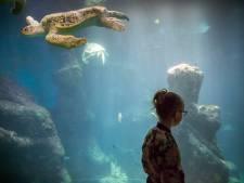 Nieuw aquarium open voor bezoekers Wildlands Adventure Zoo Emmen