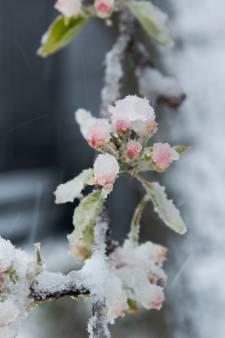 Lente verloopt in slow motion: door koude aprilweken ontwikkelt natuur zich zeer traag