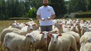Vlaamse schapenplattekaas verkozen tot beste streekproduct van Denderstreek