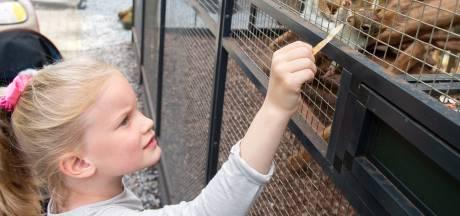 Knabbel en Babbel spotten? Vijftien eekhoornsoorten te zien in exotische tuin Etten-Leur