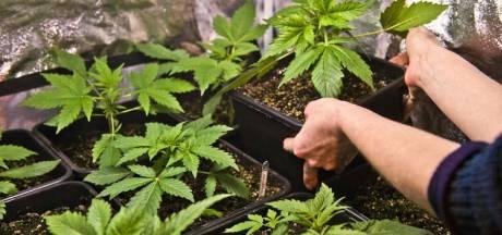 Vader en zoon zetten samen cannabisplantage op