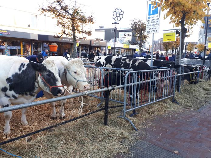 Koeien in de Hogestraat.