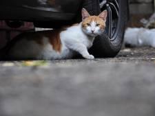 Als een van de laatsten wil provincie Utrecht stoppen met omstreden jacht op verwilderde katten