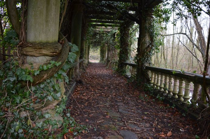 De overwoekerde pergola in het Verloren Bos wordt gerenoveerd.