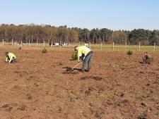 Nieuw bos bij De Moer: schimmelpapje geeft jonge boompjes extra kans