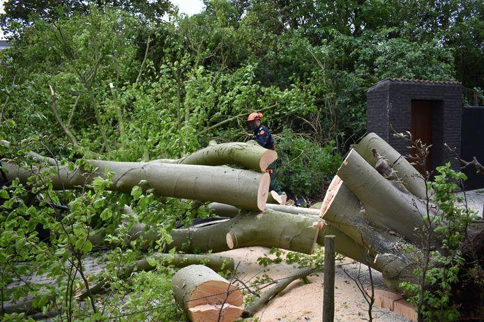 De brandweer kwam vandaag al een groot deel van de boom verwijderen. De rest volgt morgen door de gemeente
