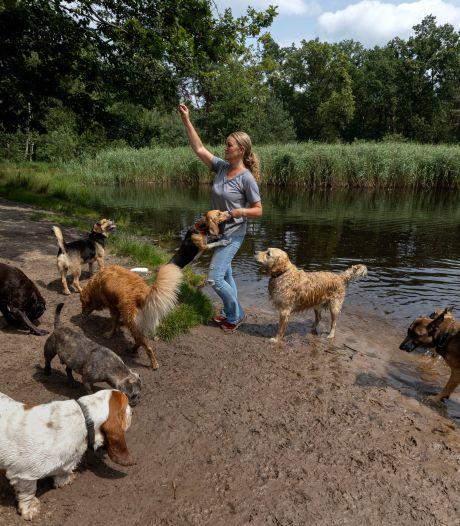 Ook de hond mag op vakantie: 'Het is net of je met een klas kinderen op kamp bent'