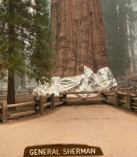 Grootste boom ter wereld bedreigd door aanhoudende bosbranden in Californië